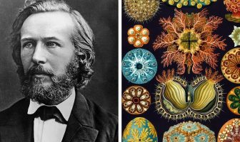 Ernst Haeckel Biography – Ernst Haeckel Theory Of Evolution