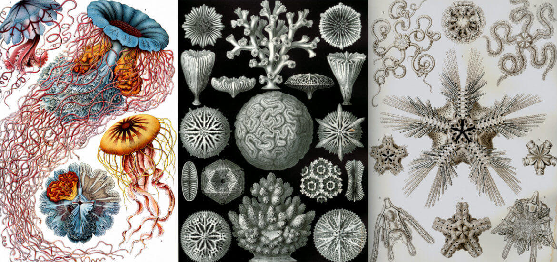 Ernst Haeckel Biography – Ernst Haeckel Theory Of Evolution