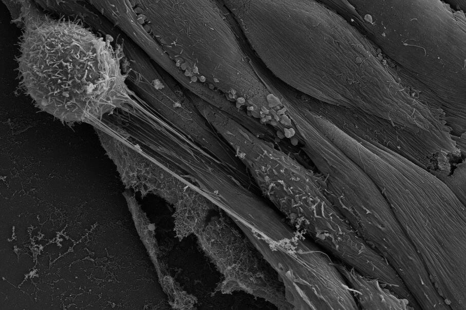 How do materials get into and out of blood vessels?