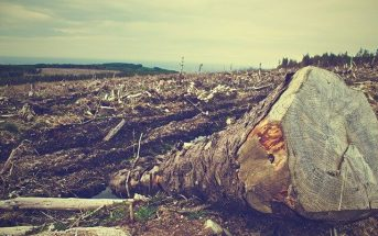 Causes of Deforestation - Solutions for Deforestation and How to Prevent It