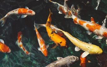 How Does Noise Pollution Affect Fish? The Most Affected Species