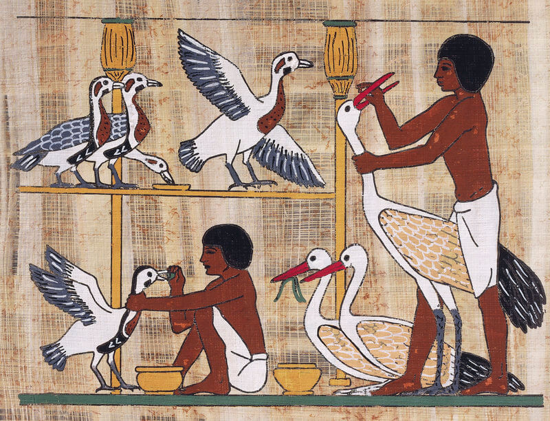 Geese in History - Ancient Egypt, Romans and Ancient Britons