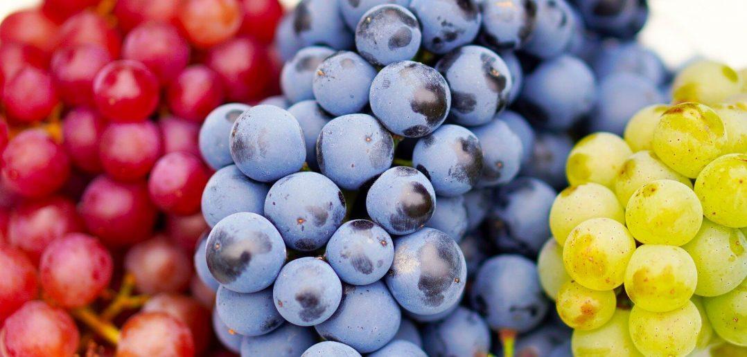 Grapes and Grape Vine Growing Tips, Grape History