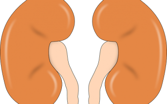 Kidney Functions In The Human Body