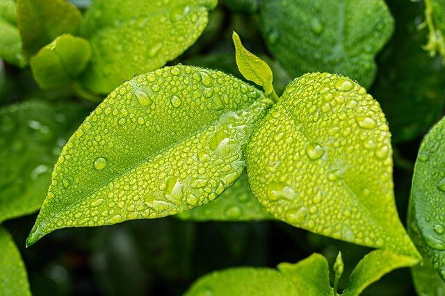 Why Does Moisture in The Air Change? How Does Dew Occur?