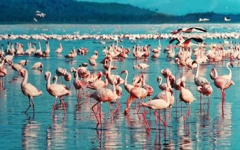 Where is Kenya? What is Kenya Famous for and Destinations
