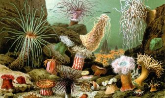 Information On Anthozoa – Structure – Reproduction and Characteristics