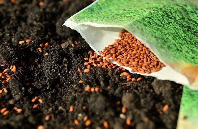 How Do Seeds Grow? What Causes a Seed to Grow?