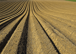What is Soil? Types of Soil – What are the kinds of soil?