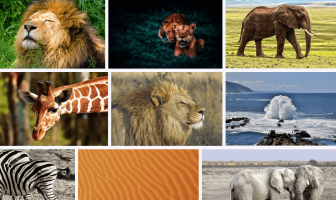 10 Characteristics Of Africa - What are the features of the Africa?