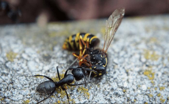 How Do Organisms Get Food?