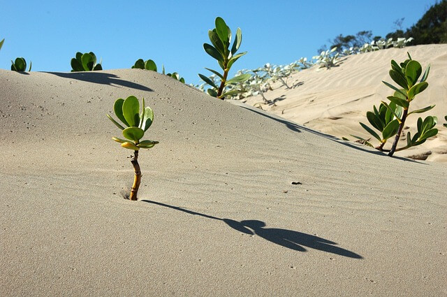 Which plants live on deserts?