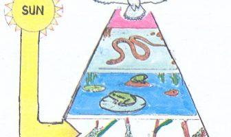 How is an energy pyramid like a food chain?