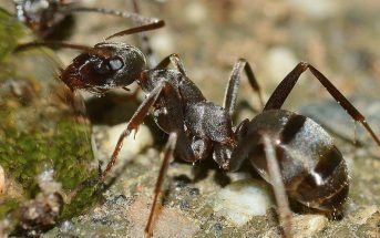 The Body Structure Of Ants - What is the Anatomy, Body Structure, Parts of Ants?