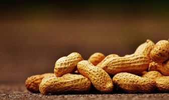Information About Peanut - What are the characteristics, features, uses of peanut?