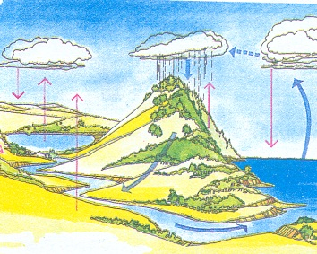 What is Water Cycle? Defination and Diagram of Water Cycle