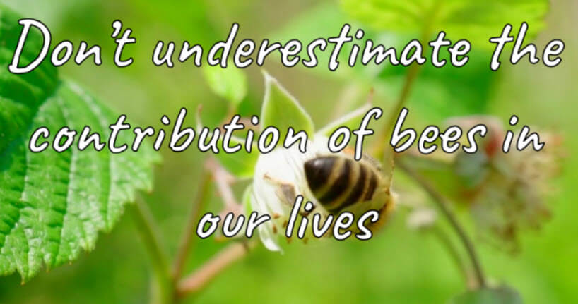World Bee Day Messages, Wishes, Quotes, Slogans