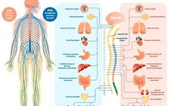 10 Characteristics Of Nervous System - What is the Nervous System?