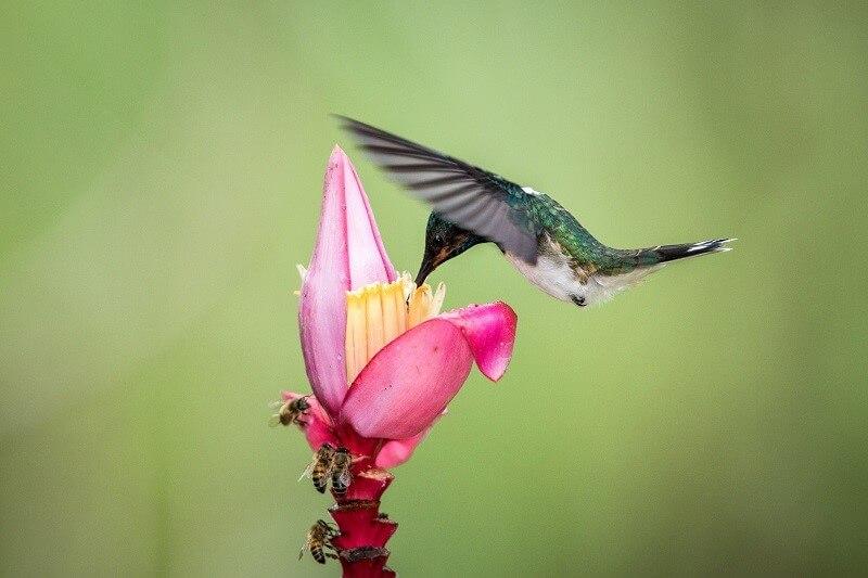 Pollination by Birds