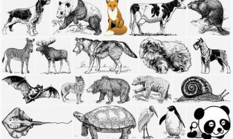 use Zoology in a sentence