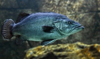 10 Characteristics Of Fish - What Are The Most Known Features?