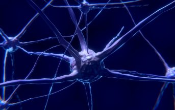 10 Characteristics Of Neurons (Nerve Cells) and Nervous System