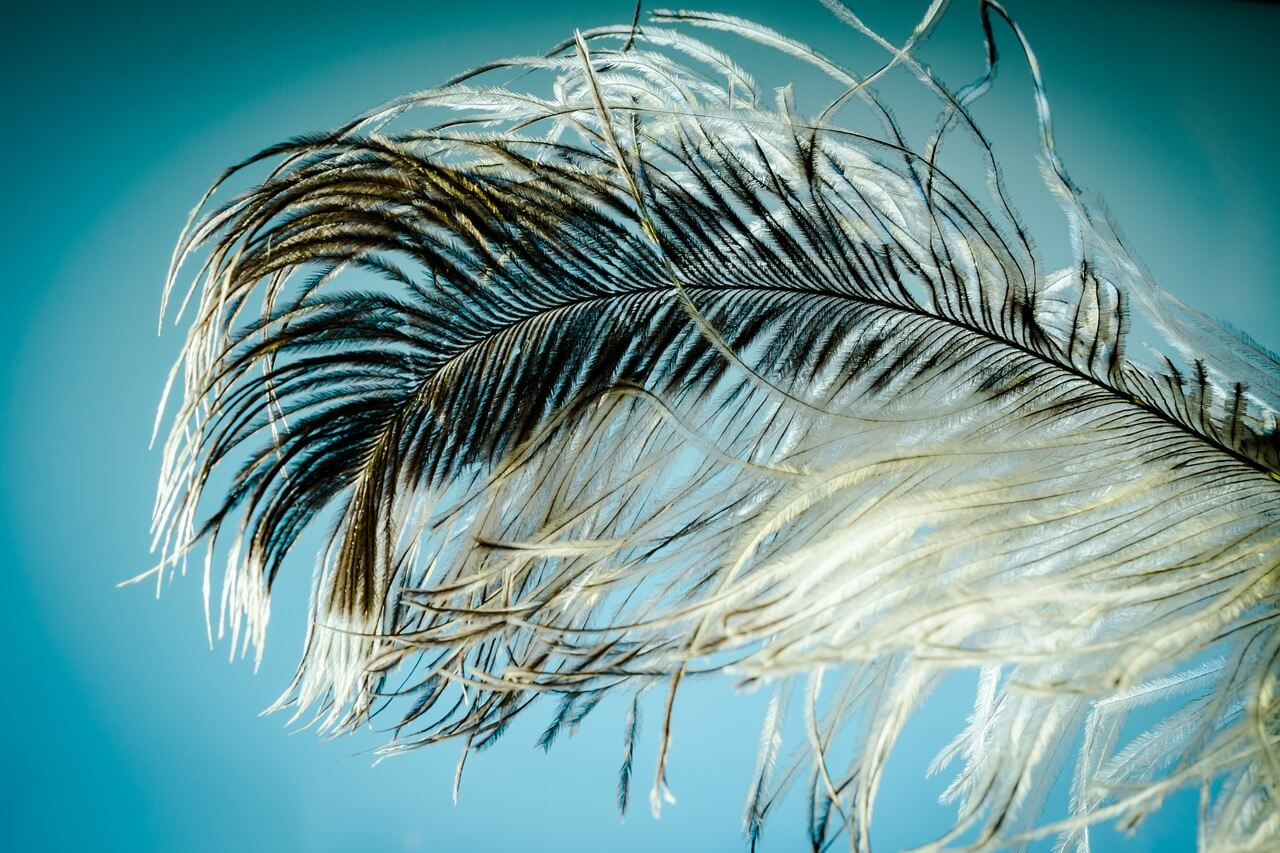 Feather Structure - Growth and Types - Information About Feather