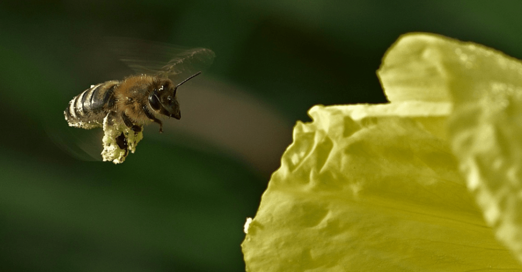 What Is Pollination? Pollination Types