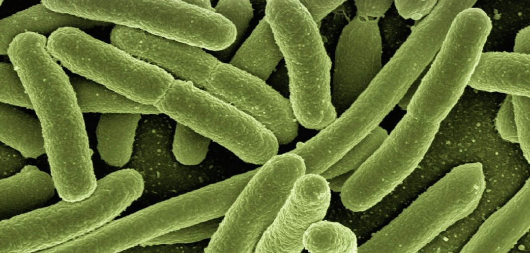 Information About Bacteria and Viruses - Properties, Facts, Similarities and Differences