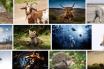 10 Characteristics Of Mammals - What are Mammals?
