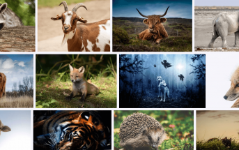 10 Characteristics Of Mammals - What are Mammals?