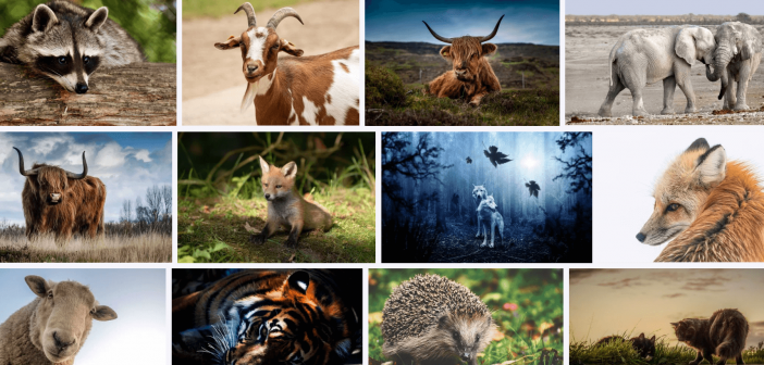 10 Characteristics Of Mammals – What are Mammals?