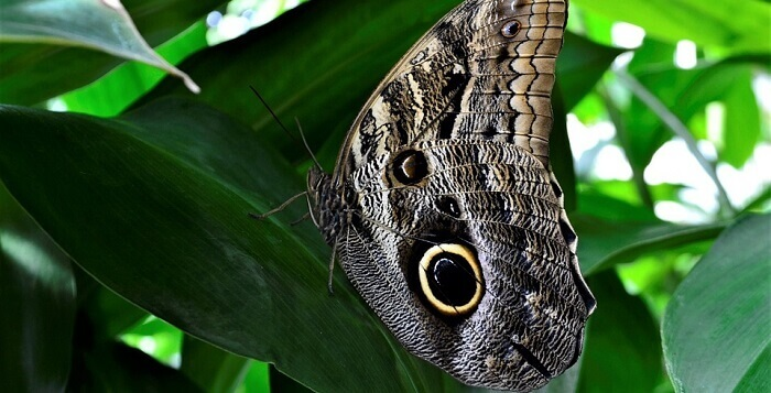 10 Characteristics Of Arthropods - What are arthropods?