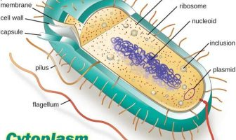 10 Characteristics Of Cytoplasm - What is Cytoplasm?