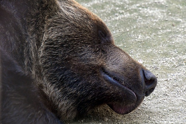 Animals Hibernate List - Facts and Examples - What Happens to the Animal's Body?