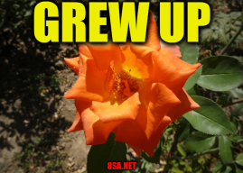 """Use Grew up in a Sentence – How to use """"Grew up"""" in a sentence"""