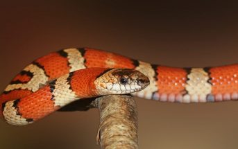 10 Characteristics Of Snakes - What are Snakes?