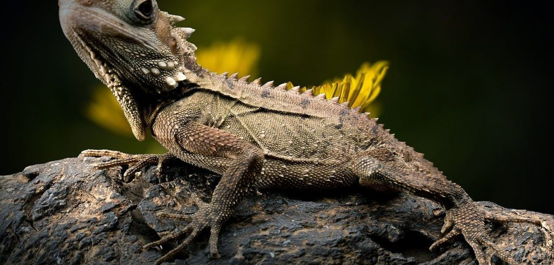 10 Characteristics of Reptiles - What Are Reptiles?