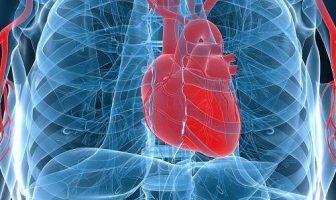 Characteristics Of Heart
