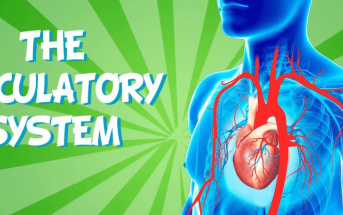 10 Characteristics Of Circulatory System - What is the Circulatory System?
