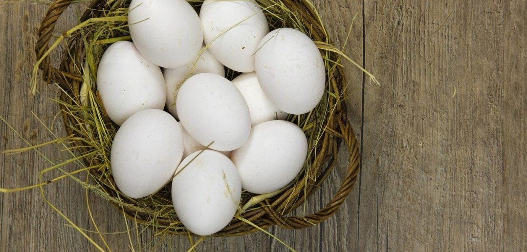 National Egg Day - Activities and Why We Love National Egg Day