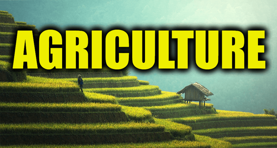 """Use Agriculture in a Sentence - How to use """"Agriculture"""" in a sentence"""
