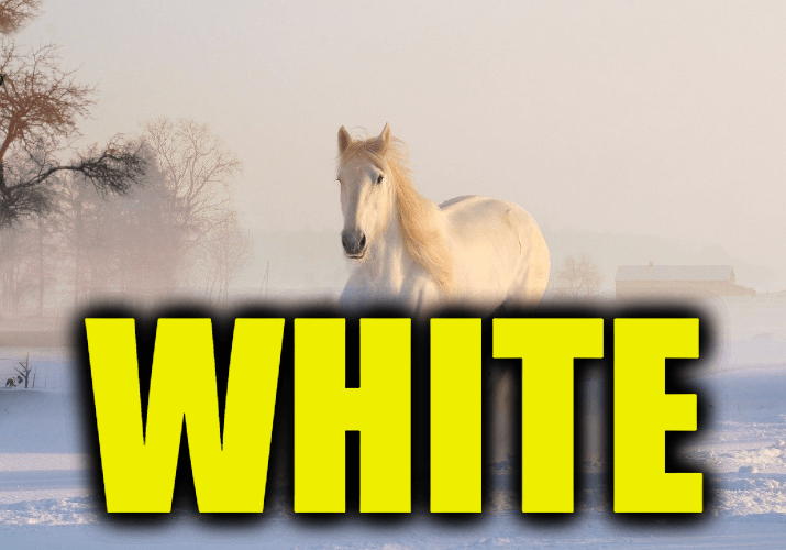 """Use White in a Sentence - How to use """"White"""" in a sentence"""