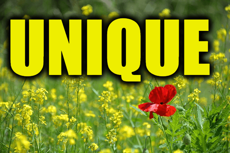 """Use Unique in a Sentence - How to use """"Unique"""" in a sentence"""