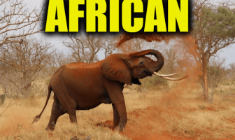 "Use African in a Sentence - How to use ""African"" in a sentence"