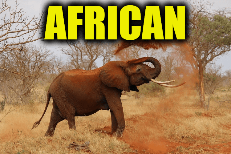 """Use African in a Sentence - How to use """"African"""" in a sentence"""