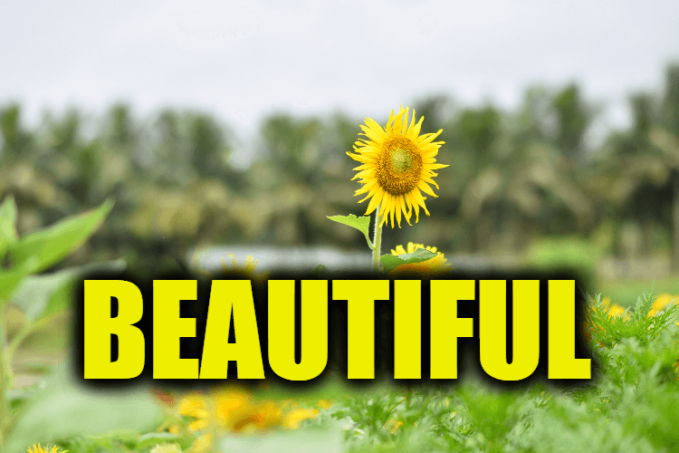 """Use Beautiful in a Sentence - How to use """"Beautiful"""" in a sentence"""