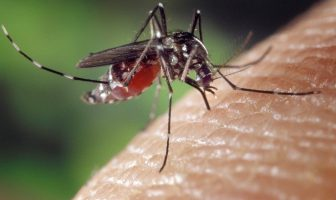 What is Yellow Fever? History, Symptomatology and Diagnosis