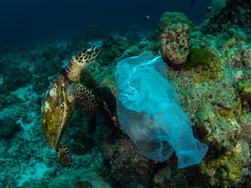 Scientists Discover A Possible Solution To Plastic Pollution