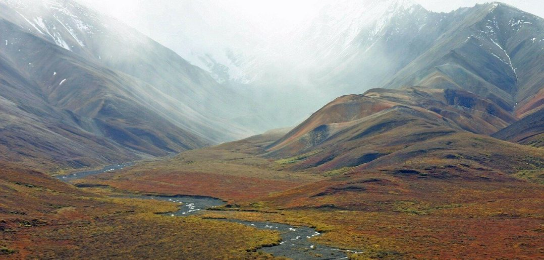 10 Characteristics Of Tundra - What is Tundra and What are its Features?